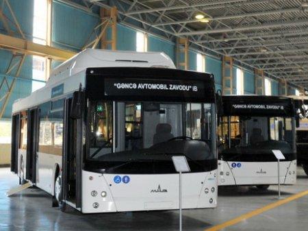 Азербайджан приступает к выпуску автобусов для городских перевозок.